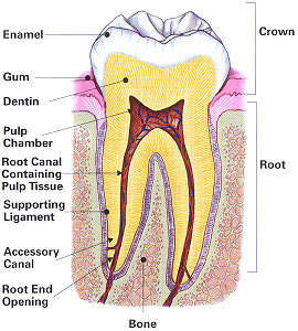 root canal treatment waterford